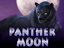 Panther Moon в казино Вулкан