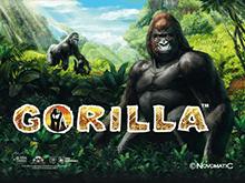 Игровой автомат Gorilla в казино Вулкан